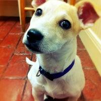 Photo taken at Lakeline Animal Clinic by AustinPixels on 1/31/2013
