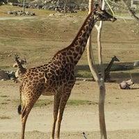Photo taken at Safari Tram by Emil on 1/22/2013