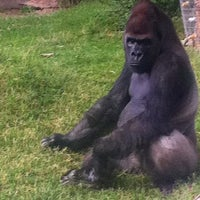 Photo taken at ABQ BioPark Zoo by ★ LP ★. on 7/31/2011