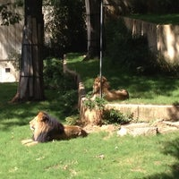 Photo taken at Great Cats at The National Zoo by Jackie G. on 9/10/2012