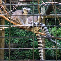 Photo taken at Binghamton Zoo at Ross Park by Xander H. on 8/24/2013