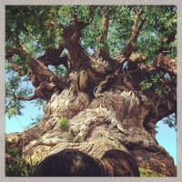 Photo taken at Disney's Animal Kingdom by Tyler O. on 5/30/2013