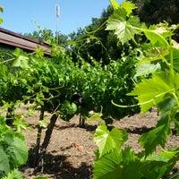 Photo taken at Madonna Estate Winery by Ma José L. on 6/3/2013