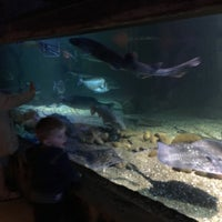 Photo taken at Sea Life Centre by Nikki S. on 1/9/2016