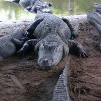 Photo taken at Alligator Adventure by Elysia W. on 6/10/2013