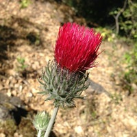 Photo taken at Pinnacles National Park by Robert P. on 5/19/2013