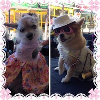 Photo taken at The Pet Corner by Cherry R. on 6/22/2014