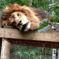 Photo taken at Exotic Feline Rescue Center by James P. on 9/17/2013