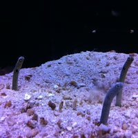 Photo taken at Sealife Centre by Robert D. on 6/24/2013