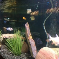 Photo taken at The Aquarium on 6th by Christine on 3/10/2012