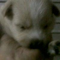 Photo taken at Quick Chicken Siliwangi 44 Depok by Boy L. on 3/10/2012