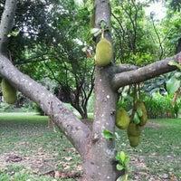 Photo taken at Jardín Botánico de Caracas by 창훈 한. on 6/27/2012