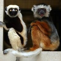 Photo taken at Duke Lemur Center by The News & Observer on 7/23/2012