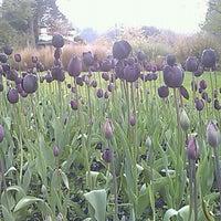 Photo taken at Dunedin Botanic Garden by Enan L. on 10/19/2011