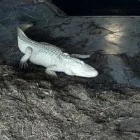 Photo taken at Alligator Adventure by Keri C. on 6/13/2012
