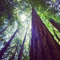Photo taken at Muir Woods National Monument by melissa t. on 6/9/2012
