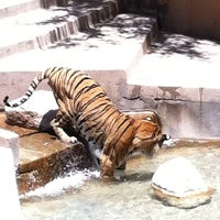 Photo taken at ABQ BioPark Zoo by Nick C. on 7/2/2011