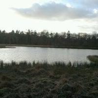 Grote ven mensinghe bos lake - Bos lak ...