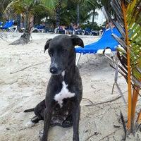 Photo taken at Majestic Beach by 🐾Kristina . on 3/29/2012