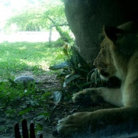 Photo taken at African Forest @ Houston Zoo by Arica H. on 5/25/2012