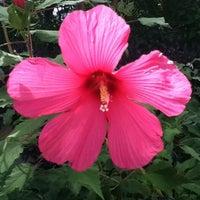 Photo taken at San Antonio Botanical Garden by Amanda H. on 8/13/2011