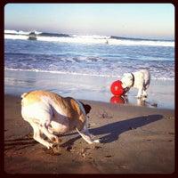 Photo taken at Ocean Beach Dog Beach by Jennifer W. on 10/12/2011