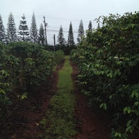 Photo taken at Kauai Coffee Plantation by Shawn H. on 3/4/2012