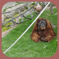 Photo taken at Fort Worth Zoo by Jessika Lee J. on 4/3/2012