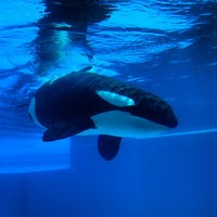 Photo taken at Marineland by Ihar T. on 9/2/2012