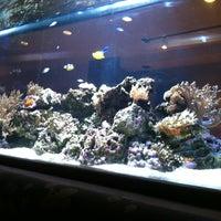 Photo taken at Kona Grill by Tony T. on 2/12/2012