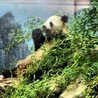 Photo taken at Smithsonian National Zoological Park by Jen K. on 8/12/2012