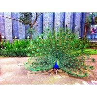 Photo taken at Kebun Binatang Gembira Loka by Tansend A. on 5/28/2012