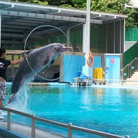 Photo taken at Underwater World And Dolphin Lagoon by Angela T. on 7/7/2012