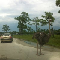 Photo taken at Lion Country Safari by Anna G. on 8/12/2012