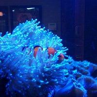 Photo taken at Blue Lotus Tattoo by Chris K. on 12/28/2011