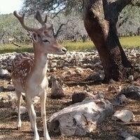 Photo taken at Natural Bridge Wildlife Ranch by Kaycee H. on 6/9/2012