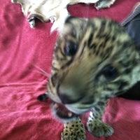Photo taken at Zoologico Joya Grande by Milan C. on 6/10/2012