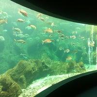Photo taken at Cretaquarium by Advanced👑❤💵 on 9/12/2012