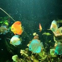 Photo taken at Underwater World by KELVIN L. on 2/21/2012