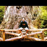 Photo taken at Big Tree by Benoît on 8/2/2012
