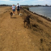 How To Get To Fiesta Island Dog Park
