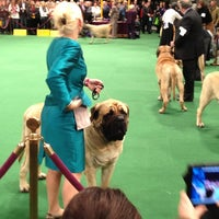 Photo taken at 2012 Westminster Dog Show by Rachael S. on 2/14/2012