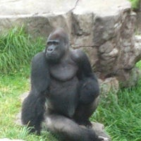 Photo taken at San Francisco Zoo by Mark M. on 8/19/2012