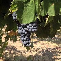 Photo taken at Dry Creek Vineyard by Wayne on 9/3/2012