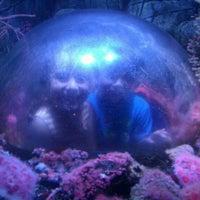 Photo taken at SEA LIFE Aquarium by Thomas G. on 5/20/2012