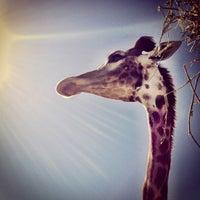 Photo taken at Parque Safari by Puchilla O. on 2/9/2012
