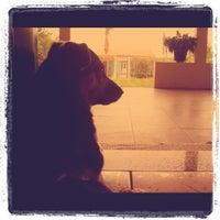 Photo taken at Pet Shop Portal by luiz s. on 3/19/2012