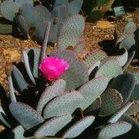 Photo taken at Desert Botanical Garden by Amanda K. on 3/31/2012