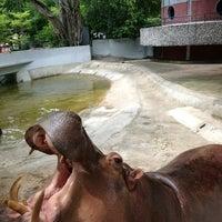 Photo taken at Dusit Zoo by Pat J. on 5/27/2012