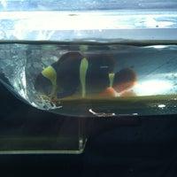 Photo taken at Aquarium City by Crystal Y. on 5/20/2012